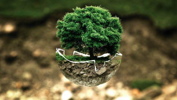 las zalesienia środowisko  polityka klimatyczna