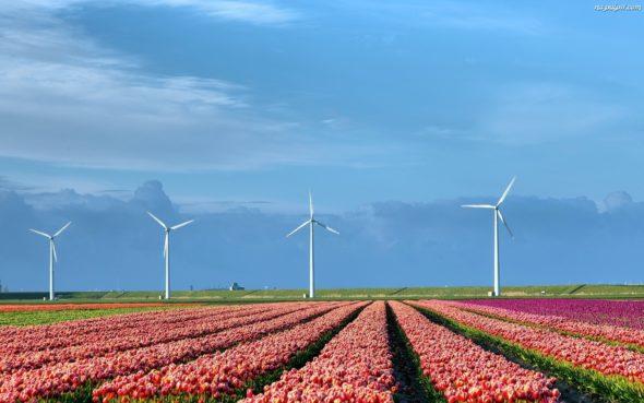 OZE Holandia energetyka wiatrowa