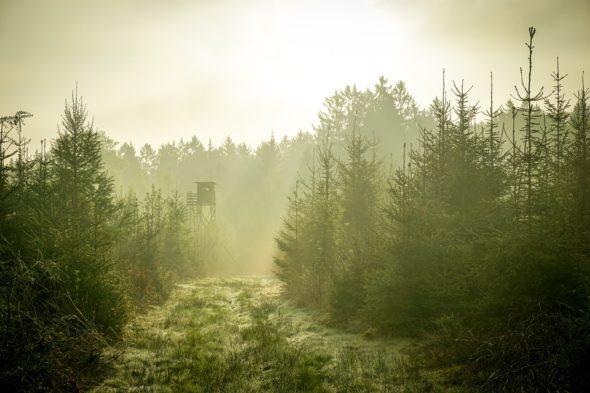las zalesianie środowisko