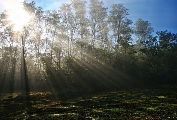 las środowisko