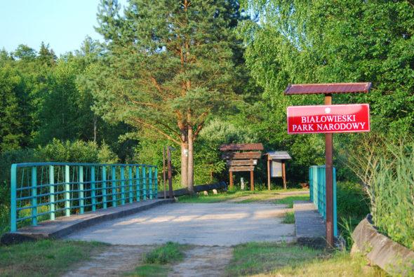Białowieski_park_narodowy_01