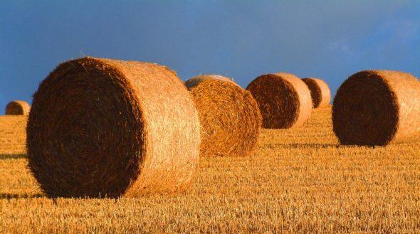 OZE, biomasa, słoma