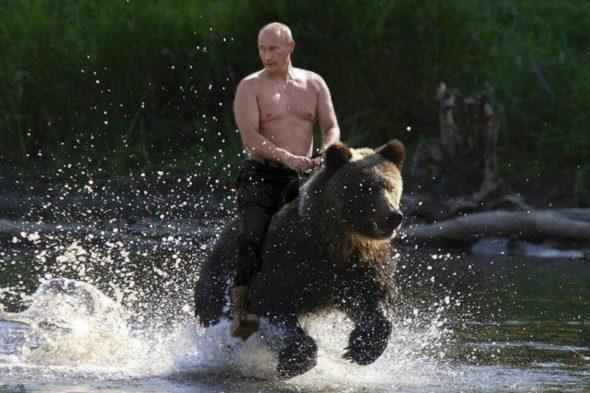 Putin bear