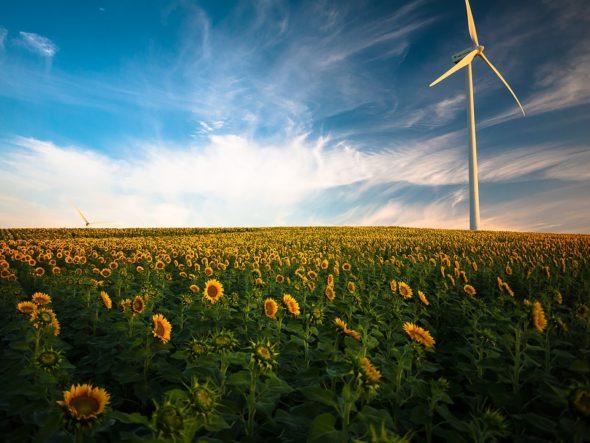 rolnictwo oze wiatraki