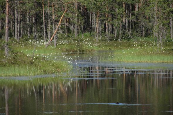 torfowisko las środowisko