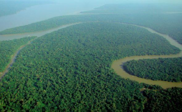 Las amazoński