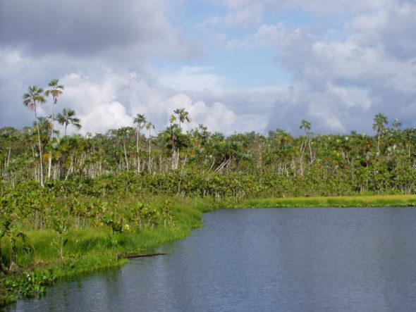 Amazonia Flickr