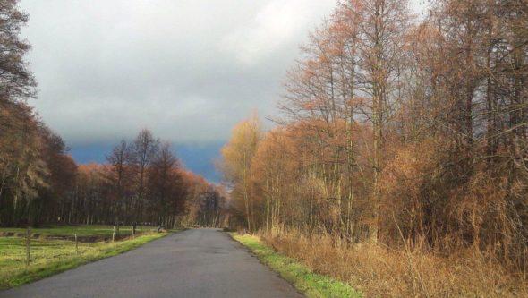 środowisko las klimat