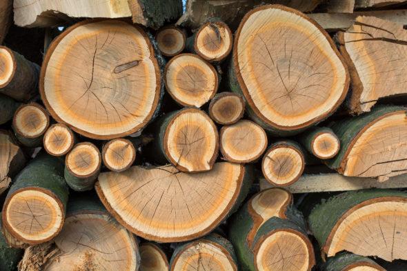 drewno lasy