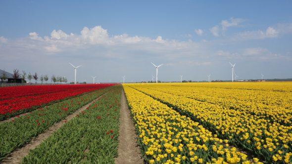 energetyka oze wiatrak Holandia