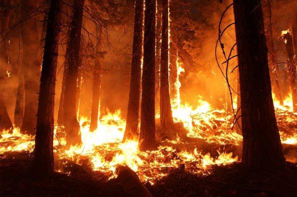 Pożar lasu. Fot. Skeeze/Pixabay