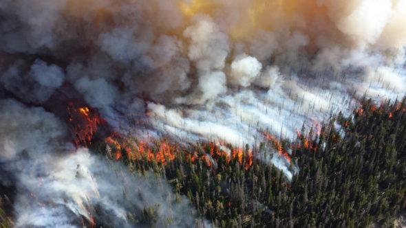 Pożar lasów fot.Pixabay