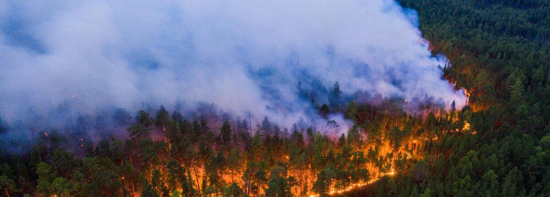 Pożar Syberii fot. Greenpeace.ru