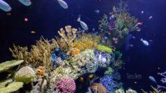 Wielka Rafa Koralowa. Źródło: Flickr